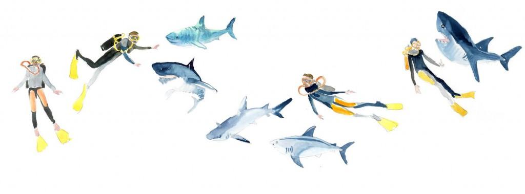 requin idee reçue mangeur d'homme mesideesnaturelles