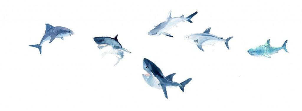 requin mangeur d'homme idée reçue mesideesnaturelles