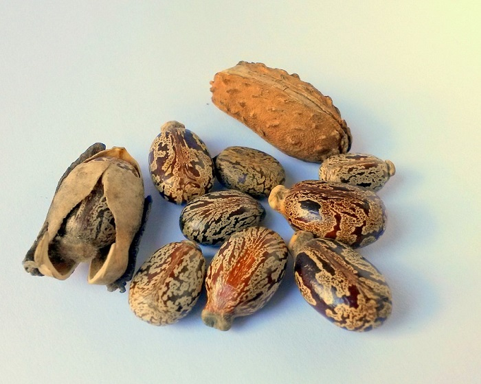 graines-de-ricin-beauté-mesideesnaturelles