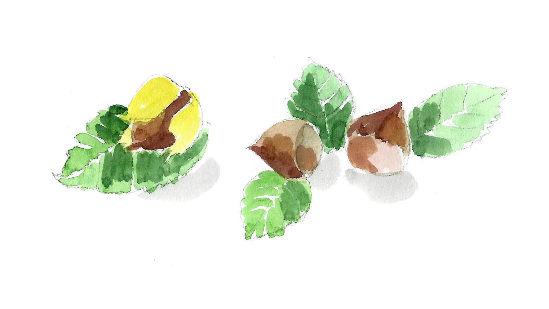 noisettes-pâteàtartiner-miam-chandeleur-cuisine-recette-bio-Nutella