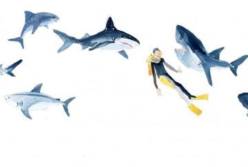 requin idee reçue mesideesnaturelles